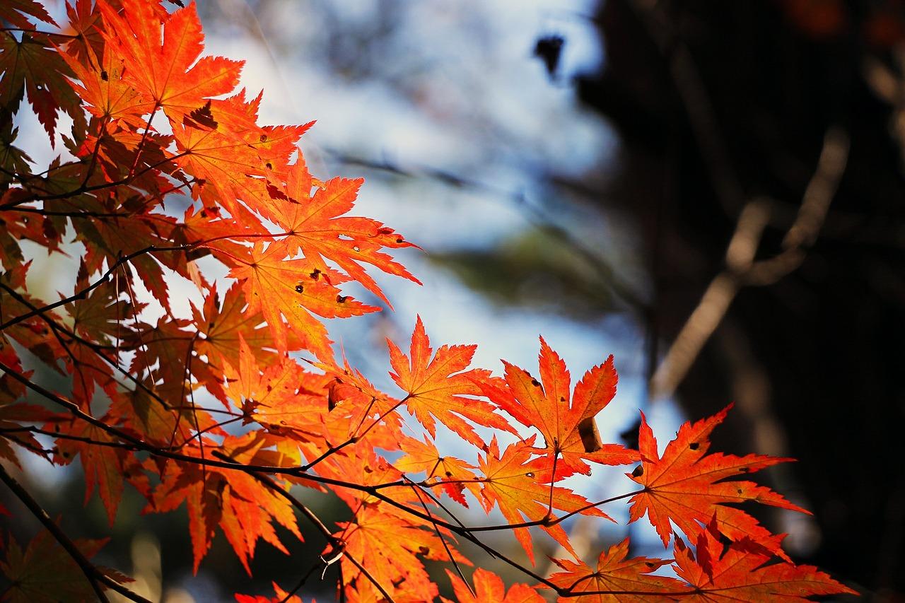 5 tipov, ako dostať pod kontrolu jesennú únavu